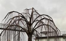 Strom života v Kovozoo
