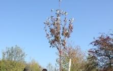 Stromy pro Rochus