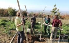 Sázení stromů na Rochusu