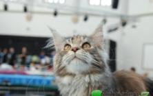Mezinárodní výstava koček v Bojkovicích