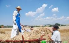 Ukázka jak naši předci mlátili obilí