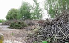 Haldy větví v Havřicích
