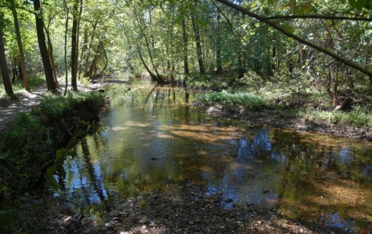 Zavlažování Kněžpolského lesa prý s vodou ve sklepech nesouvisí