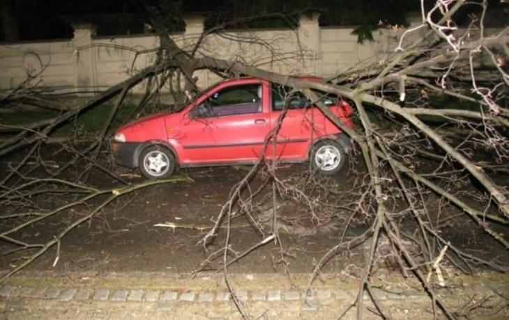 Strom vyděsil těhotnou řidičku