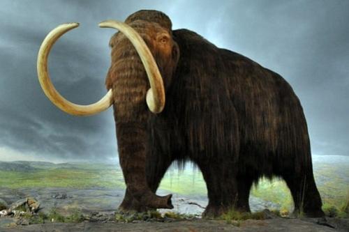 Zvídálkové se vydají za mamuty!