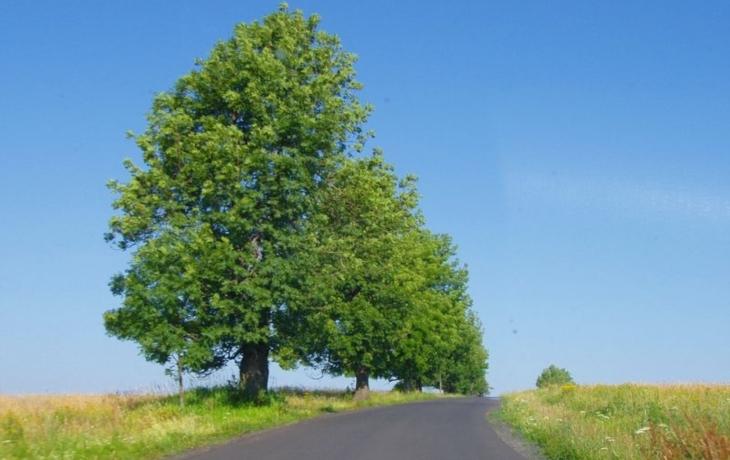 Prakšice obnoví zeleň, projekt bude do měsíce