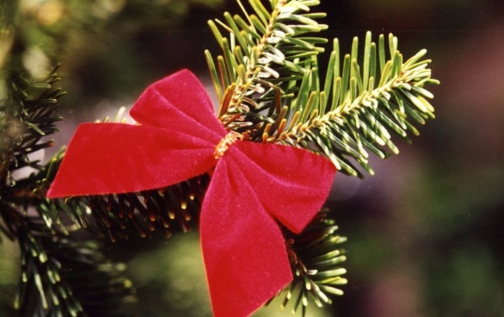 "Bánov letos našel vánoční strom v ""zatáčce smrti"""