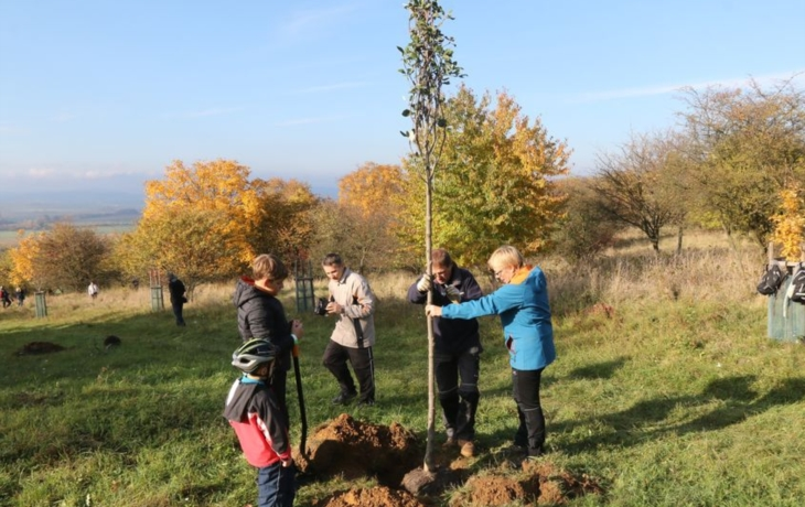 Vysázeny další stromy
