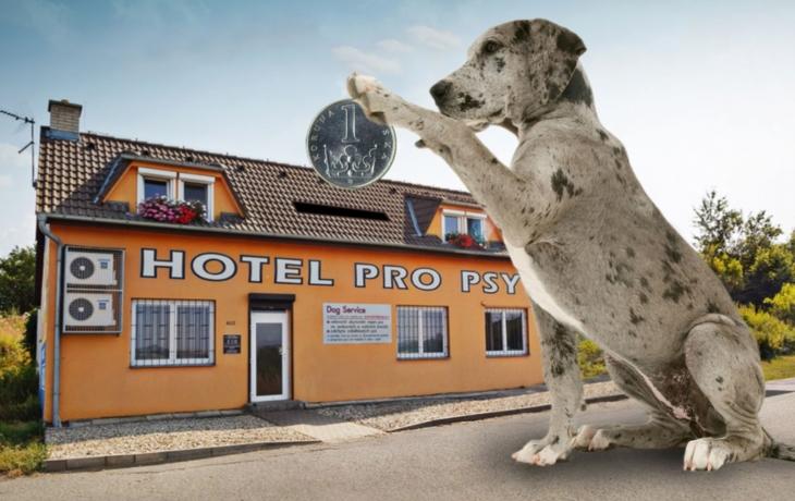 Hotel pro psy čekají pravidelné kontroly! Je továrnou na veřejné peníze?