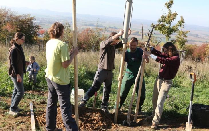 Zasadili nové stromy