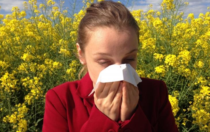 Alergici pláčou, radnice jim pod okny vysadila luční kvítí