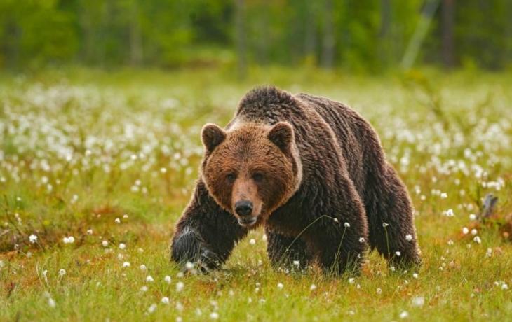Medvěd se vrátil! Na selfie zapomeňte