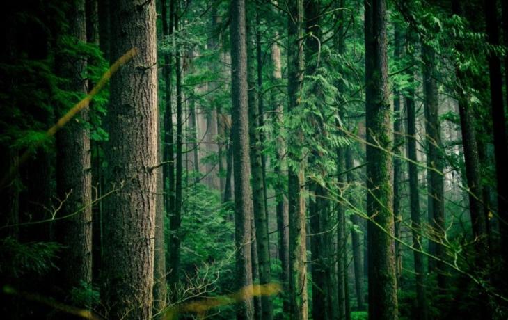 Často prší, ale zdání klame. Sucho dál ničí lesy, majitelé dostanou 5,4 milionu