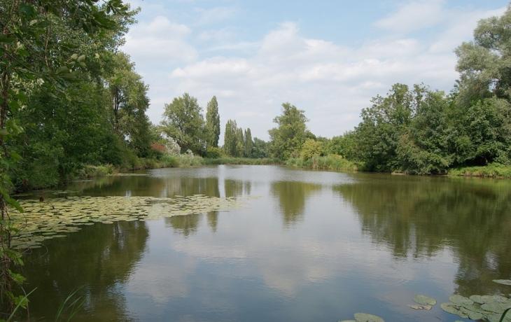 Rybník v Olší. Nová zásobárna vody pro Salašku