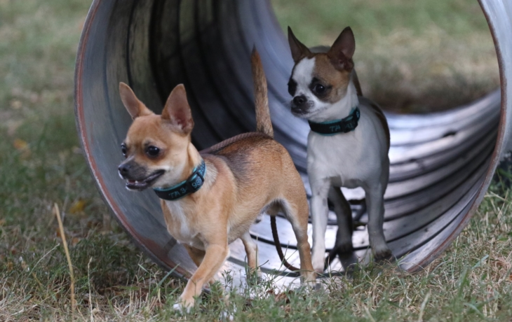 Psi řádí na novém cvičišti v Sadech