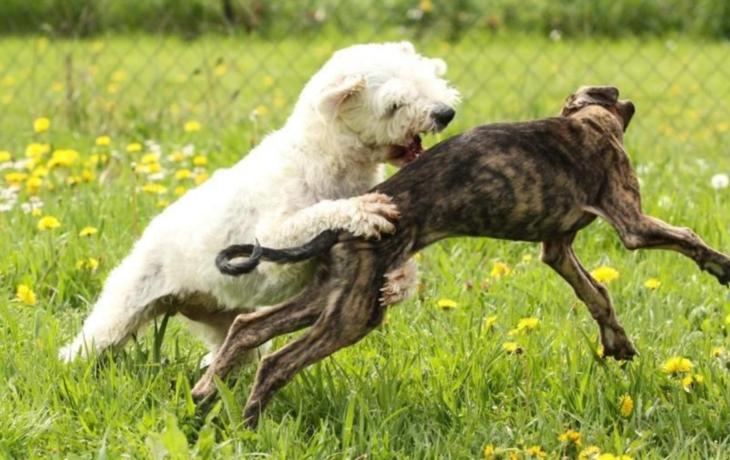 Strach na Východě. Pobíhající psi útočí, chovatelka přišla o část prstu