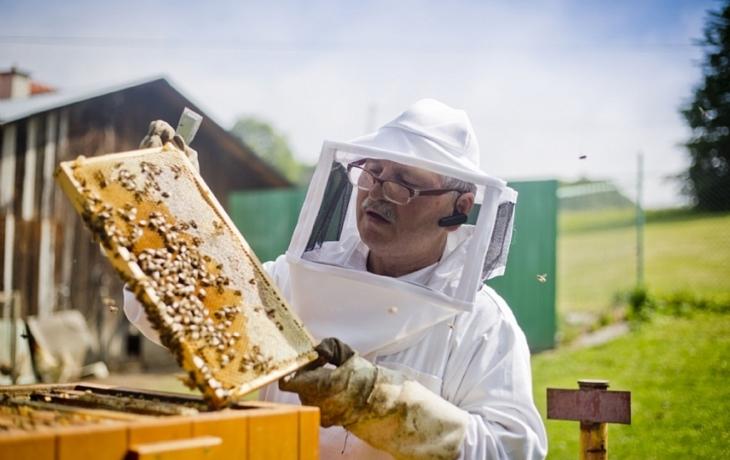 Včelaři mohou žádat o finanční podporu