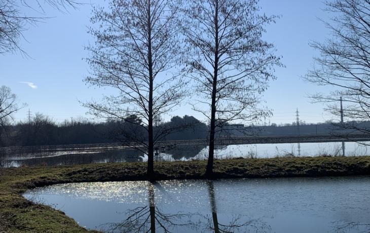 Zahoďte holínky, k rybníku v Olší povede stromořadí