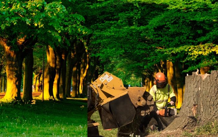 Den Země: Každý strom musíme chránit!