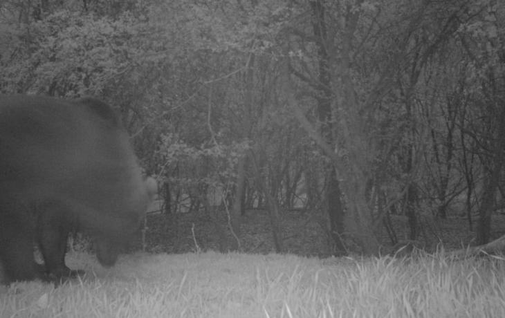 """Myslivce """"vystrašil"""" medvěd, zachycený fotopastí v Javorovci"""