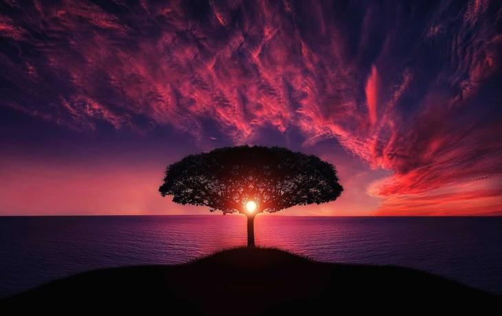 Každé znamení má svůj strom