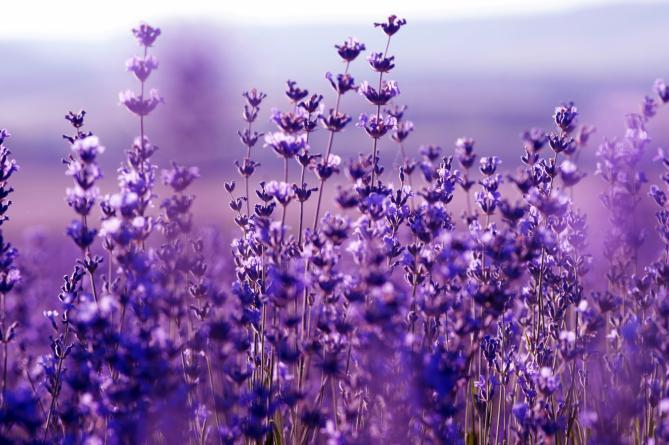 V obci voní růže i levandule. Květiny ozdobí i zídku