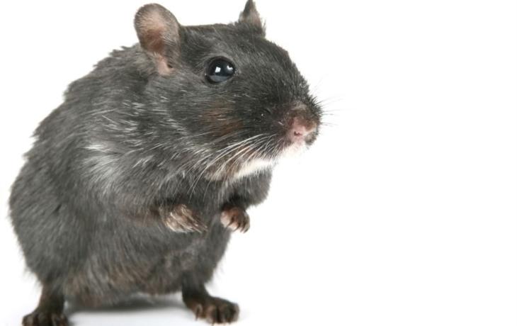 Kaufland políčil na myši, inspekce ho zavřela