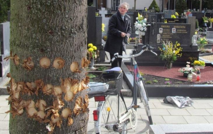 Úmyslné poškozování stromů? Nejčastěji na hřbitovech...