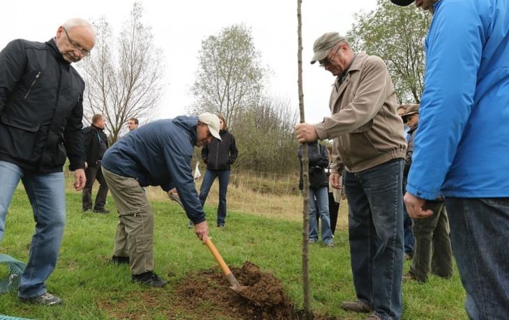 Na Rochusu přibyly další stromy