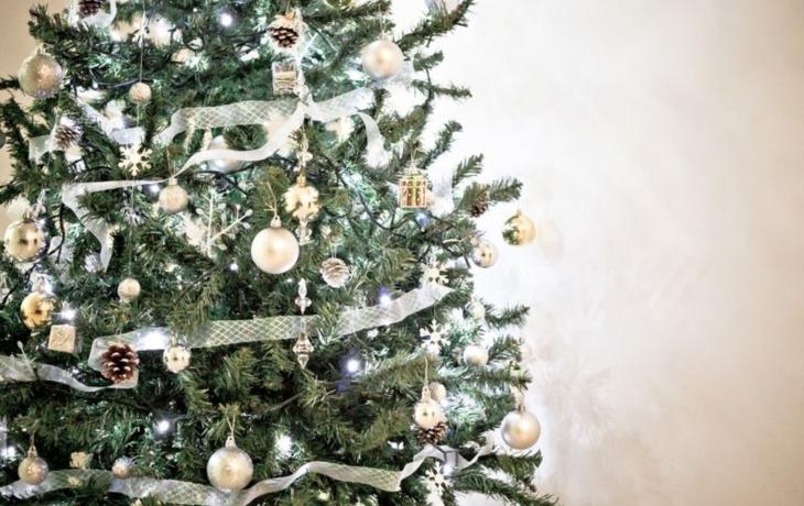 Hledá se jméno pro vánoční strom