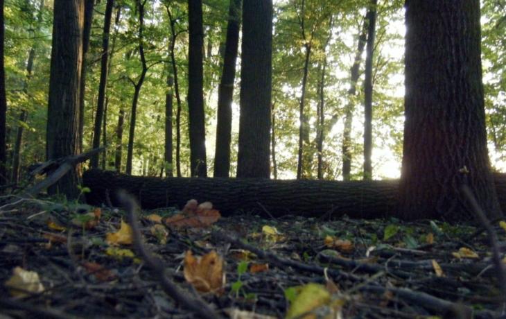 Na lesy dohlíží i mrtvý starosta