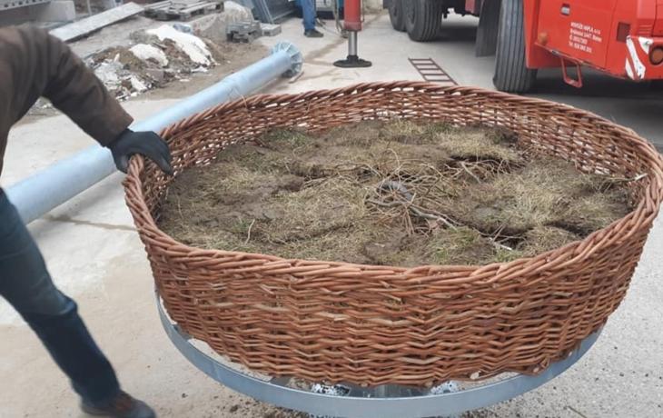 Ve Starém Městě už vyhlížejí čápy. Hnízdo stálo 770 tisíc korun!