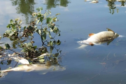 Kejda z bioplynky otrávila hejno ryb