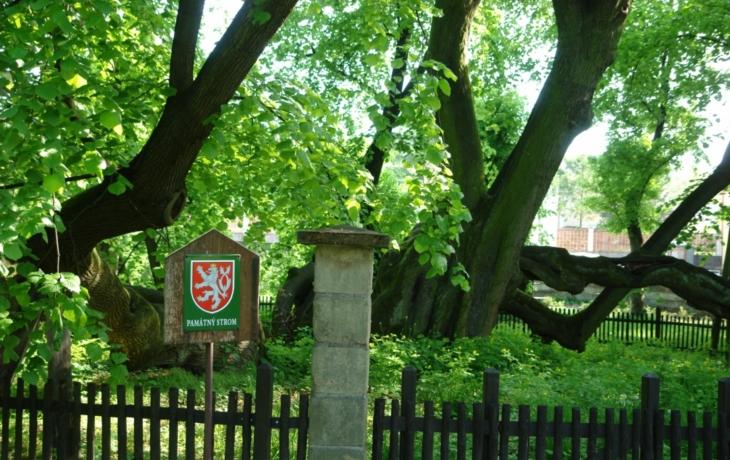 Památný strom napadlo jmelí