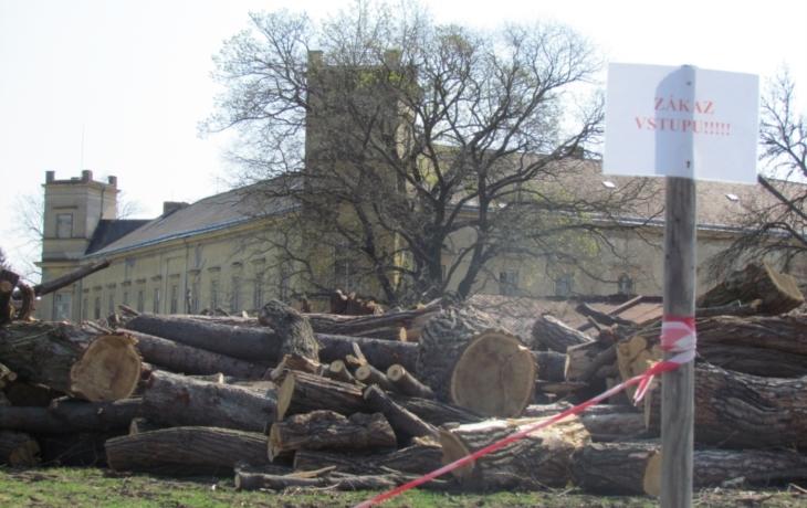 Radnice draží dřevo z parku