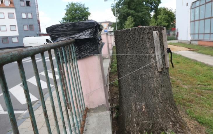 Oplocení držel strom, hrozilo zřícení