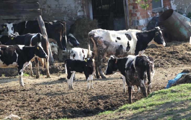 Dar městu: týraná zvířata