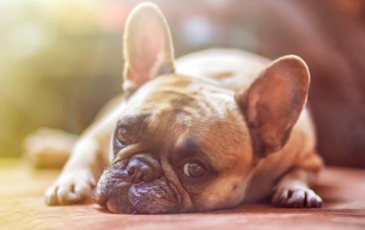 Maso se skobou a hroty. Děsivá návnada na psy?