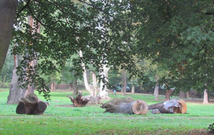 V prořídlém parku vysadí 13 700 keřů