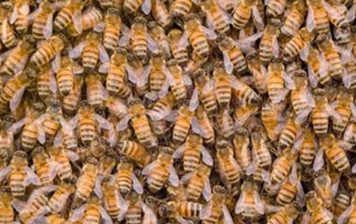 Včelaři si rozdělí 2 miliony, žádat mohou do pátku