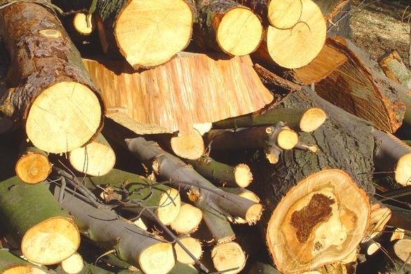 Zapli stroje a zdevastovali 70 stromů!