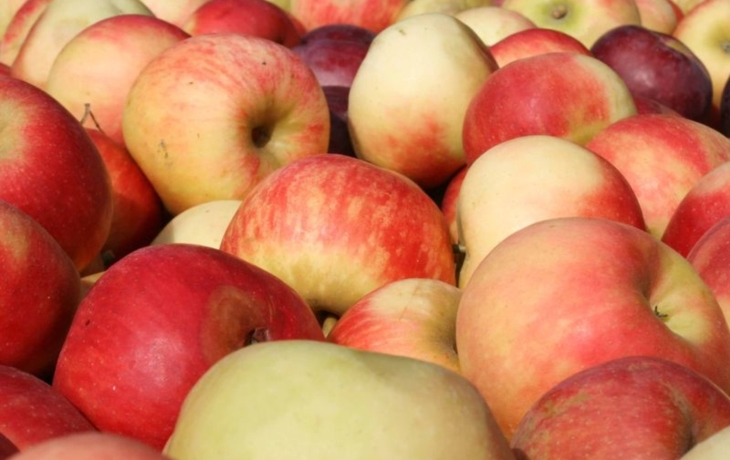 V Bajarově sadu rostou i Citronky a Šidlenky