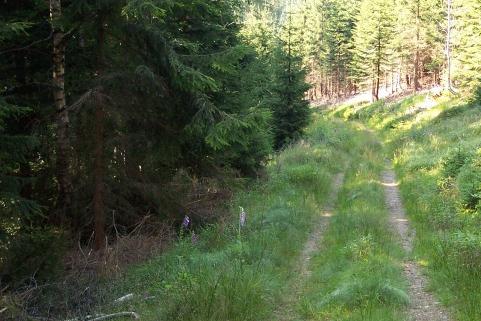 Lesní cesta propojí Bukovinu s Rovninou, přiláká pěší i cyklisty