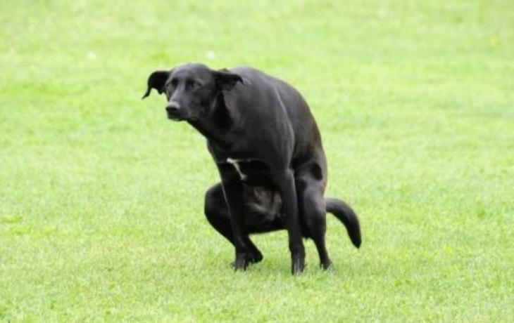 Za psa připlatí, ale dostanou zdarma pytlíky