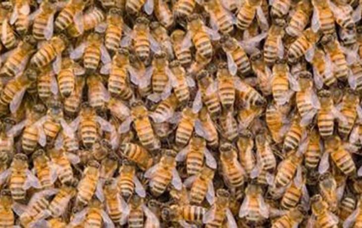 Včelaři mohou žádát kraj o podporu