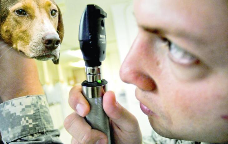 Aujeszkyho choroba. Zabiják psů, proti kterému není obrana