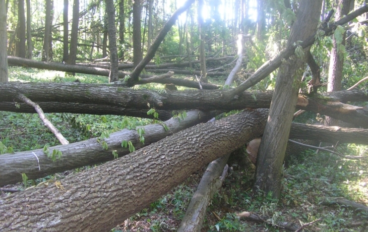 Zmizel les s 500 stromy