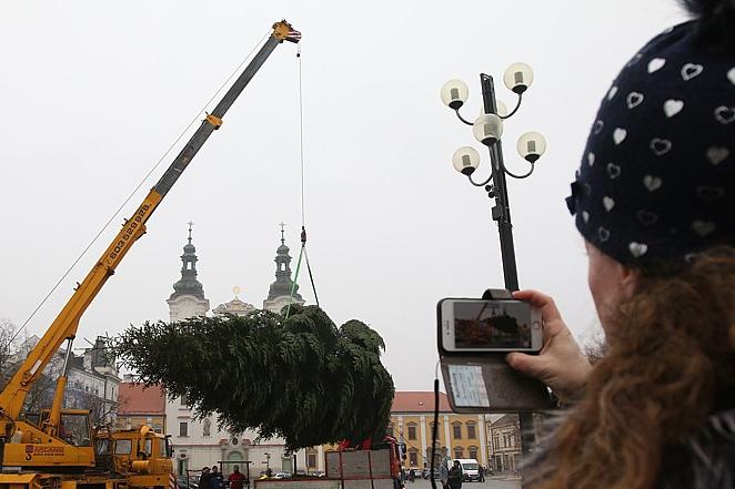 Vánočním stromem je jedle z Mařatic