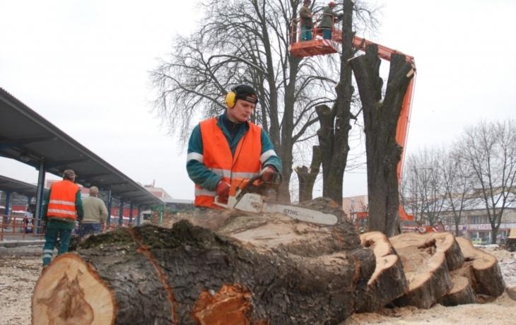 K zemi půjde stovka stromů