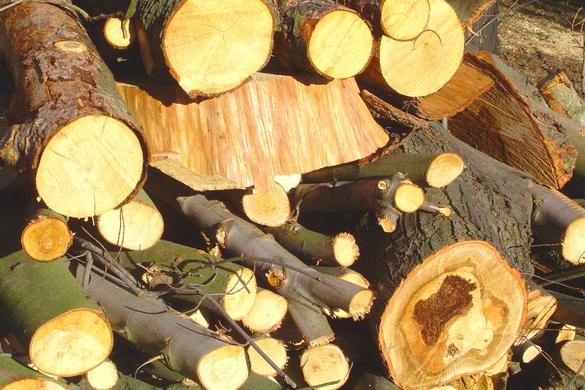 Zapnuli stroje a zdevastovali 70 stromů!